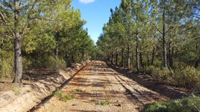 El Ayuntamiento de Palacios del Arzobispo está realizando trabajos de prevención de incendios en terrenos forestales en las zonas reforestadas.